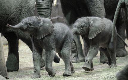 """Ученые прогнозируют масштабное """"измельчание"""" животных – слоны и носороги могут исчезнуть с лица Земли"""