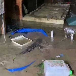 """""""У нас все гаразд, лише крокодили гуляють"""": у Ялті через потоп укрокодиляріумі частина тварин опинилася на волі"""