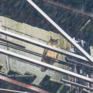 У Чорнобилі на градирні ЧАЕС оселився величезний хижий птах: фото