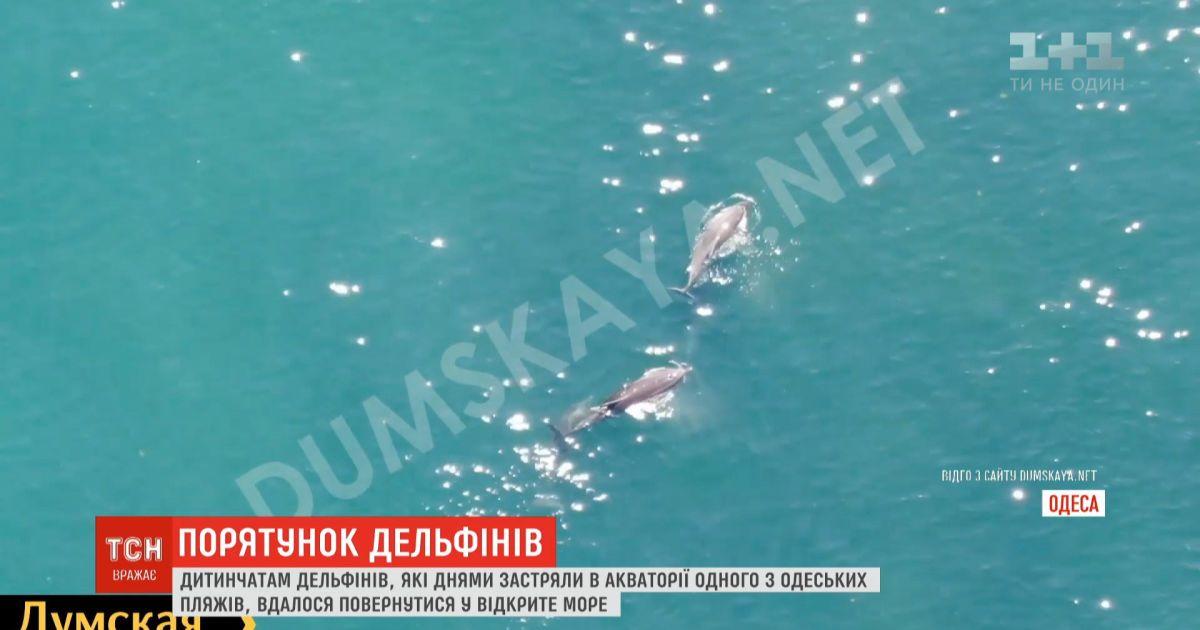 В Одессе детенышам дельфинов, которые застряли в акватории пляжа, удалось выбраться в открытое море