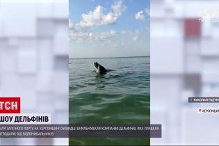 Отдыхающие сняли шоу дельфинов в Железном Порту