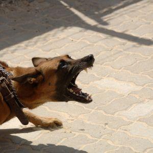 Під Херсоном домашні собаки напали на дітей: правоохоронці застосували зброю