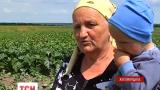 В селе Агатовка Житомирской области из-за химикатов у селян пожелтели все овощи