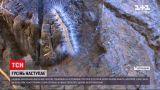 Новини України: Херсонську область атакує гусінь американського білого метелика