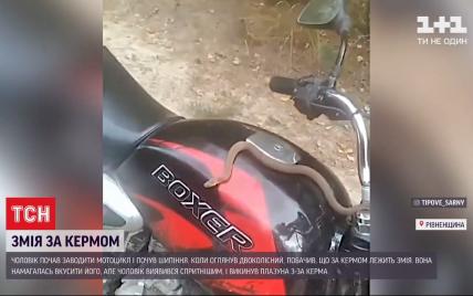 Опасная пассажирка: в Ровенской области водитель мотоцикла вовремя спасся от змеи, которая заползла на транспорт