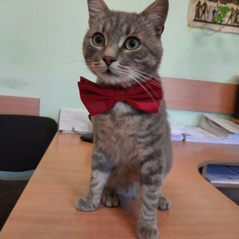 Пережил расстрел и жил на улице: в Черновцах на работу в коммунальное предприятие взяли кота