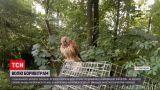 Новости Украины: в ровенском зоопарке отпустили на волю пустельг