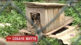 Собачий концлагерь. В приюте вблизи Нововолынска животные голодают и страдают от жажды