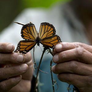 Екологи б'ють тривогу: Земля щороку втрачає від 1% до 2% комах