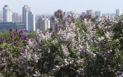 Прогноз погоды на 22 мая: в Украине будет по-весеннему тепло