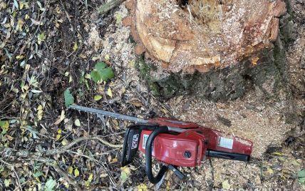 В Полтавской области в лесополосе дерево раздавило 37-летнего мужчину