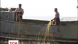 Рыба в Днепре и его водохранилищах живая, здоровая и достаточно упитанная