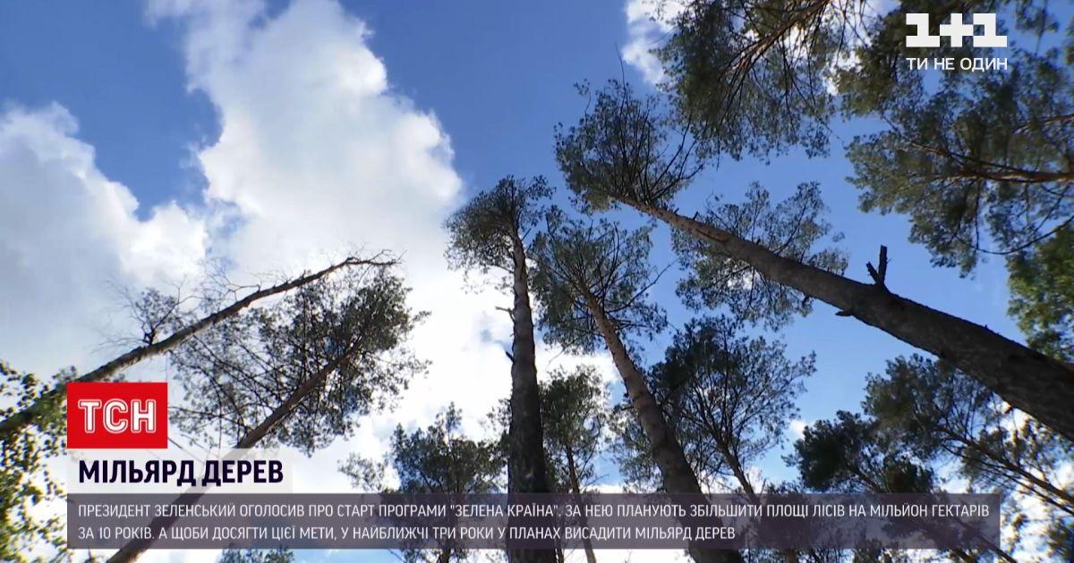 Новости Украины: реально ли высадить миллиард деревьев-сеянцев за 3 года и есть ли для этого место