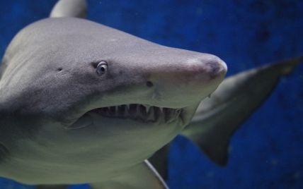 100-кілограмова акула прокусила ногу співробітнику океанаріуму (відео)