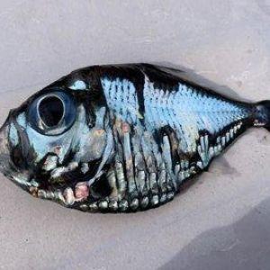 Ніби Пікассо малював. Мешканець Японії зловив чудернацьку рибину із блакитною лускою