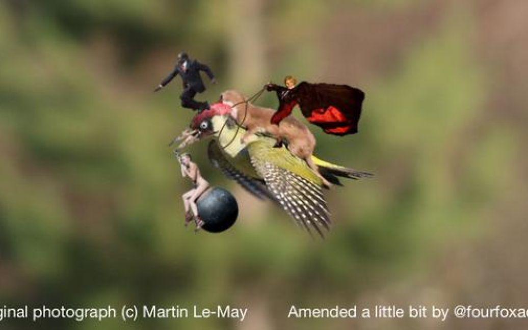 Фотограф Мартин Лемэй сделал замечательное фото ласки верхом на дятлі, а Интернет сразу отреагировал / © afp.com