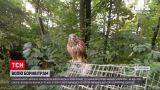 Новости Украины: в зоопарке Ровно на волю отпустили пустельг