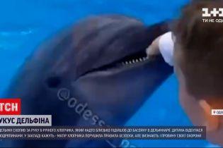 Новини України: мати хлопця, постраждалого від укусу дельфіна, не має претензій до дельфінарію