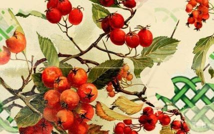 Кельтский календарь деревьев-2021: месяц боярышника