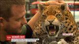 Леопард у Лондоні нагадав перехожим про проблеми видів, що зникають