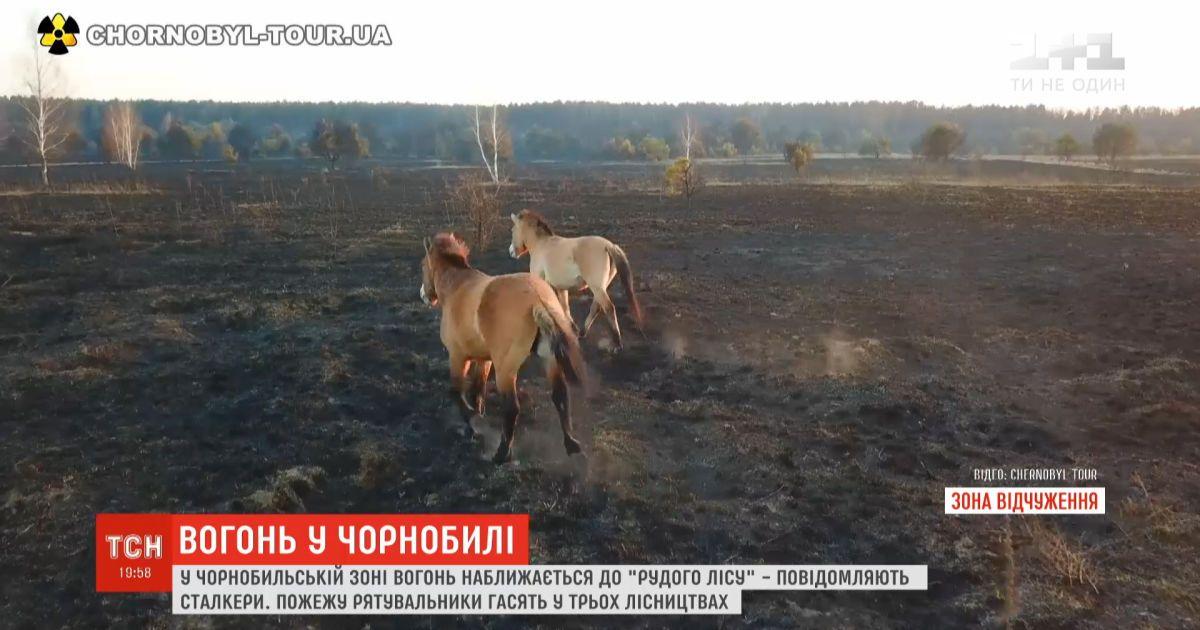 """Огонь в Чернобыльской зоне подходит к """"Рыжему лесу"""" - сталкеры"""