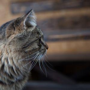 В Одеській області чоловік вбив кота на очах власника