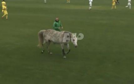 Футбол по-полтавски: конь и собаки едва не сорвали матч сборных Украины и Италии среди глухих (видео)
