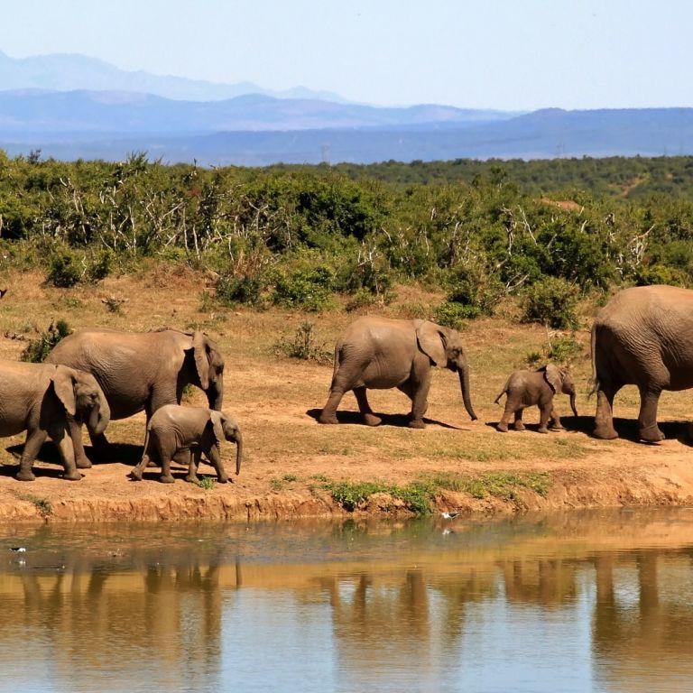 Впервые за 20 лет в индийском штате одновременно погибли два десятка слонов
