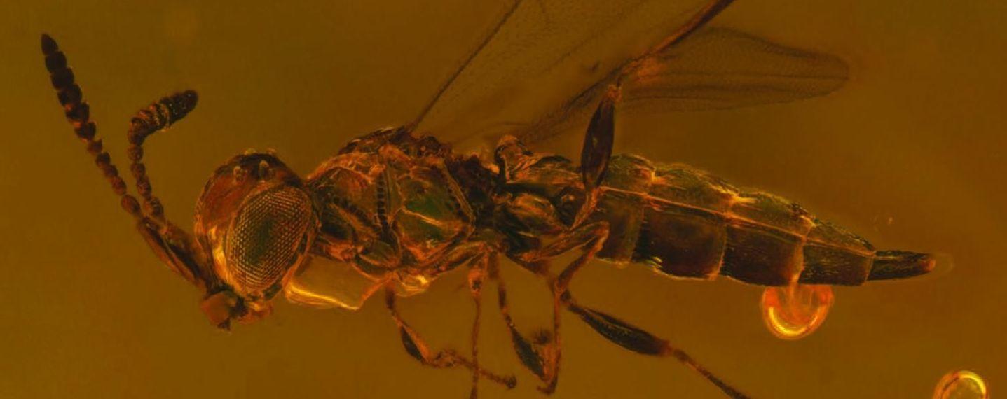 Вчені назвали новий вид давніх комах на честь культового британського співака