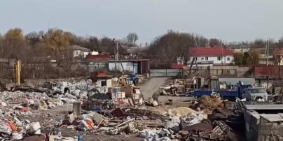 Бегают свиньи и лежат трупы животных: под Киевом обнаружили свалку площадью один гектар (видео)