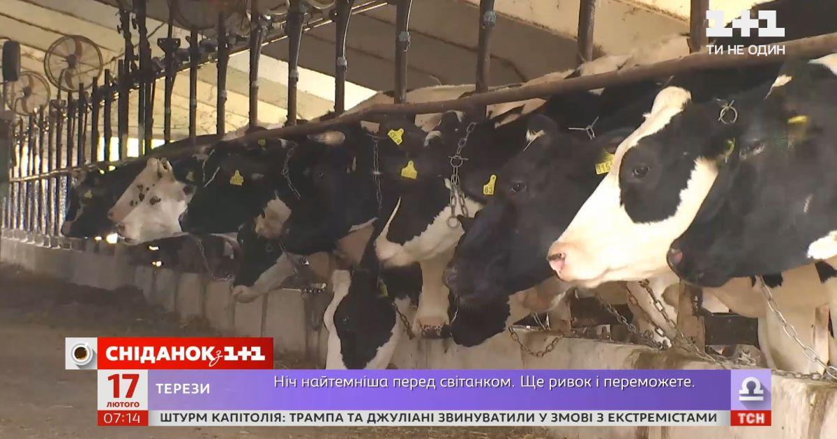 Производство молока в Украине уменьшается — Экономические новости