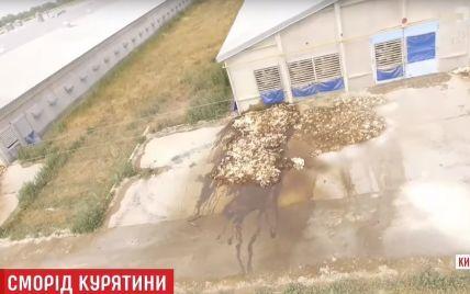 По следам скандальной курятины: в Гавриловке и Дымере люди продолжают жаловаться на невыносимую вонь