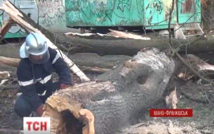 Ураганний вітер на Західній Україні зривав дахи хат, залишив 60 сіл без світла і завалив новорічну ялинку