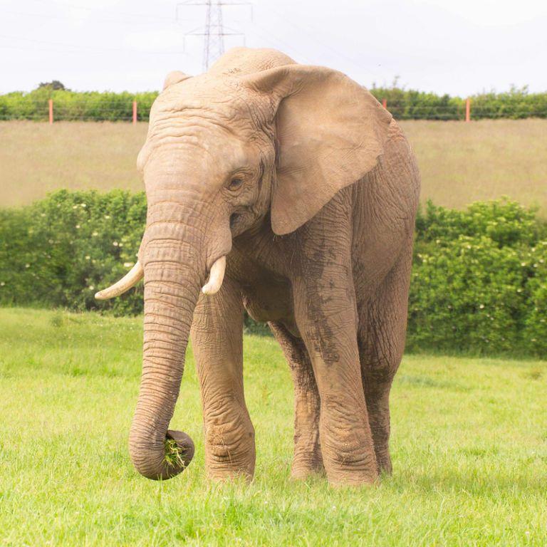 Спал в вольере: в британском зоопарке в результате нападения погиб молодой слон