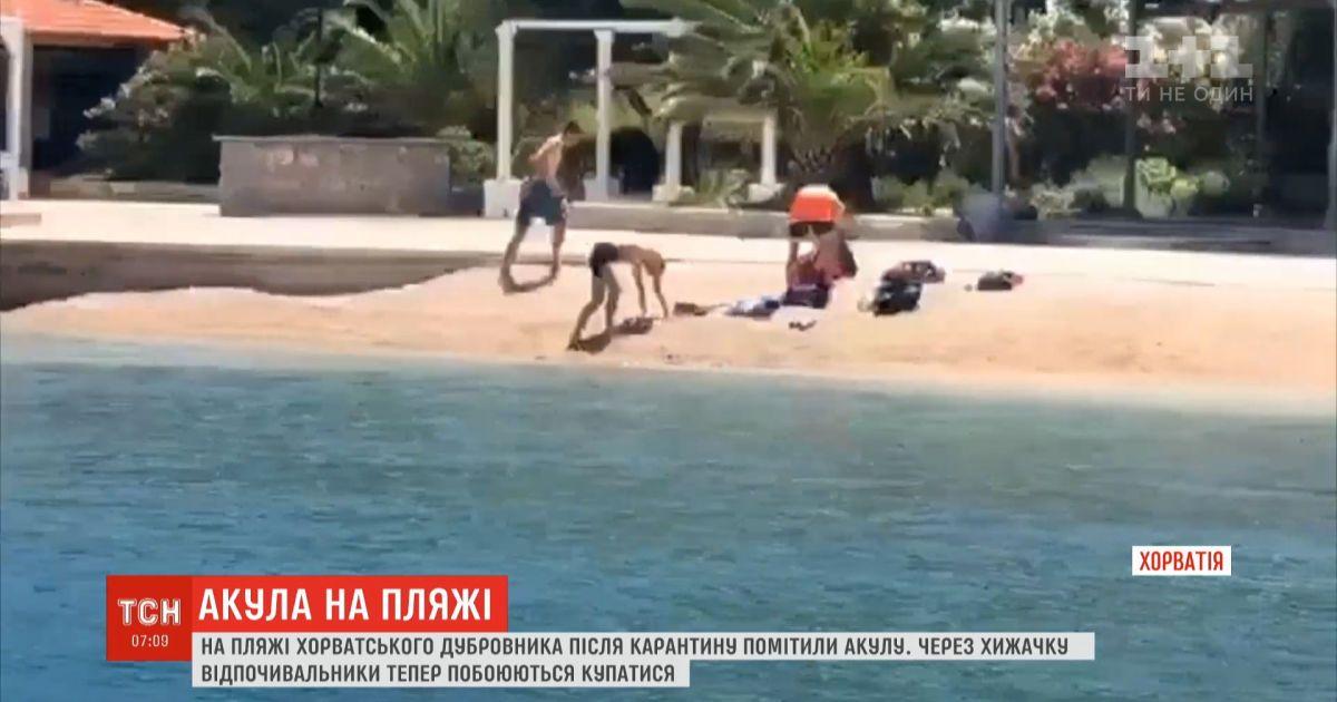 Зубастая и опасная: на хорватское побережье приплыла акула и напугала отдыхающих