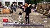 Новости Украины: во Львове в доме спасенных животных устроили осеннюю благотворительную ярмарку