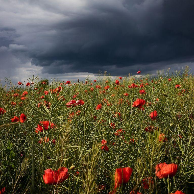 На Прикарпаття суне гроза з градом та сильним вітром: в області оголосили штормове попередження