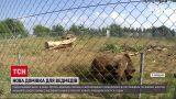 Новини України: урятовані від людей ведмеді тепер живуть у Київській області