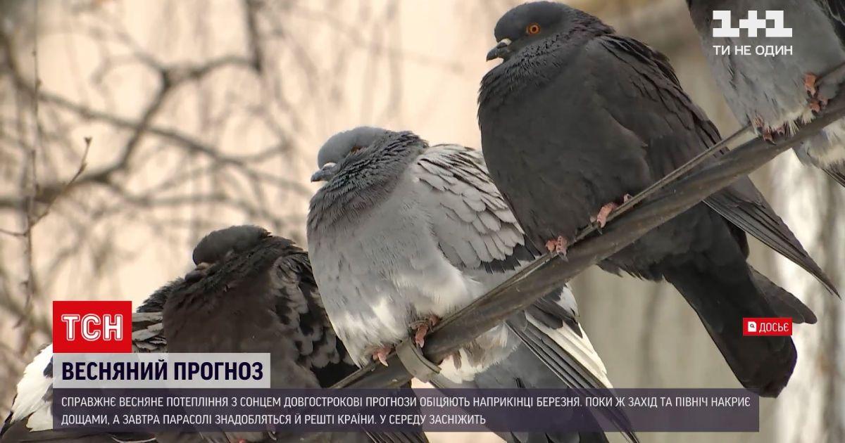 Новини України: яка погода триматиметься протягом тижня