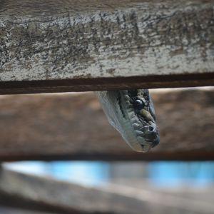 У Полтаві на вулиці маленьку дівчинку вкусила змія
