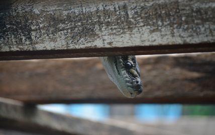 В Полтаве на улице маленькую девочку укусила змея
