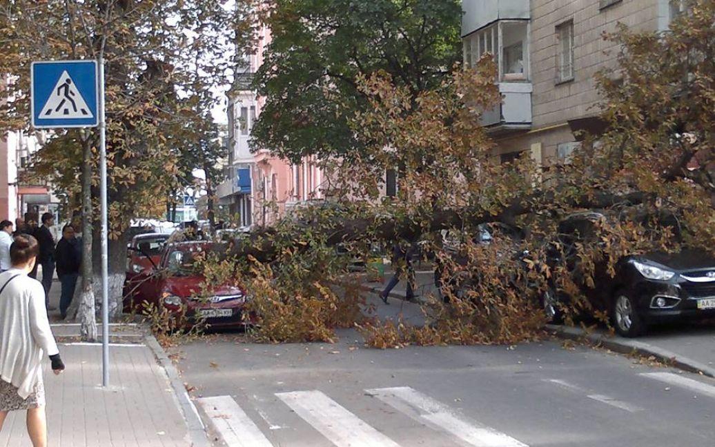 Дерево придавило машины / © facebook.com/leonidgkos