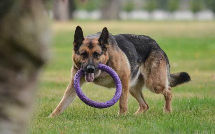 У Києві агресивний собака накинувся на хлопчика і розірвав йому стопу