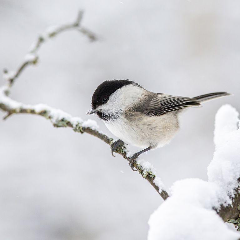 Морози до –22: синоптикиня розповіла, коли в Україні очікується пік похолодання