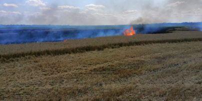 Майже 5 гектарів пшениці згоріли у Миколаївській області