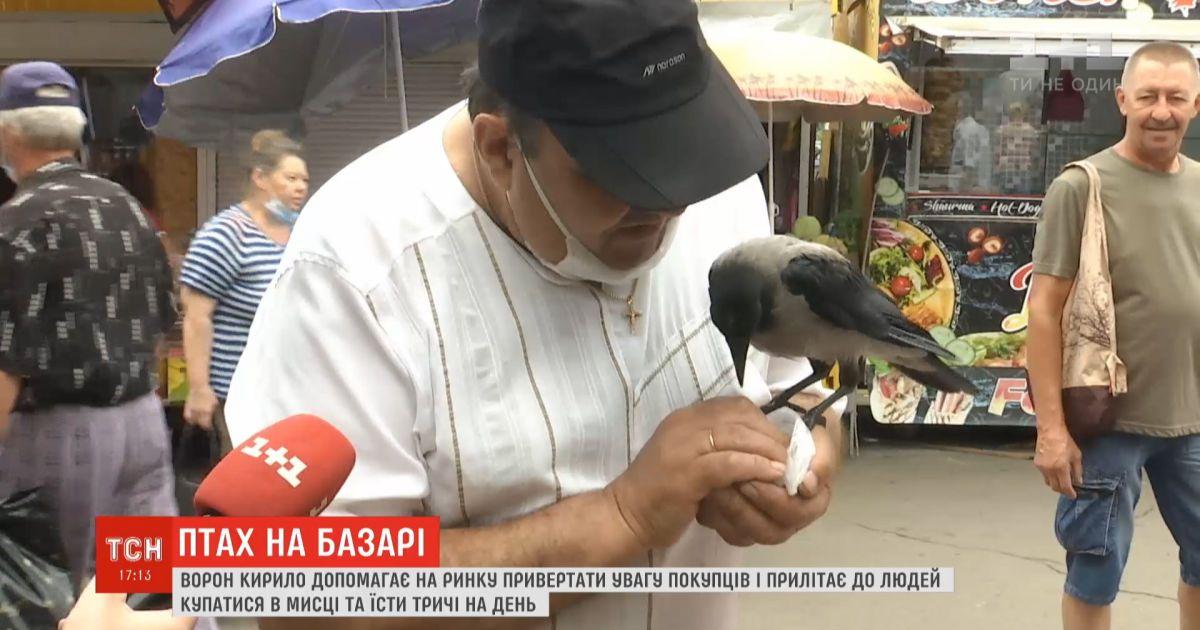 Местный символ: ворон подружился с продавцами рынка на столичной Троещине