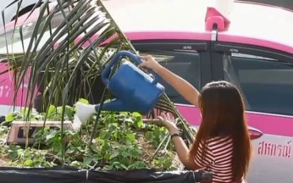 Огороды на такси: в одном из таксопарков Бангкока водители выращивают овощи на крышах автомобилей