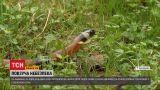 Новости Украины: во Львовской области змея укусила двоих детей, они - в реанимации