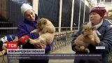 Новости Украины: в Николаевском зоопарке впервые показали пару новорожденных львят
