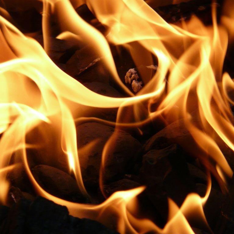 Десяток кошек и собак сгорели заживо в частном приюте в Ровенской области